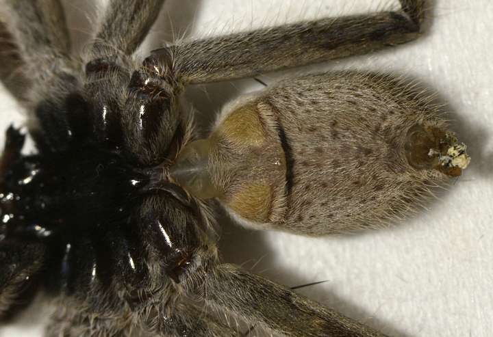 Male from underneath